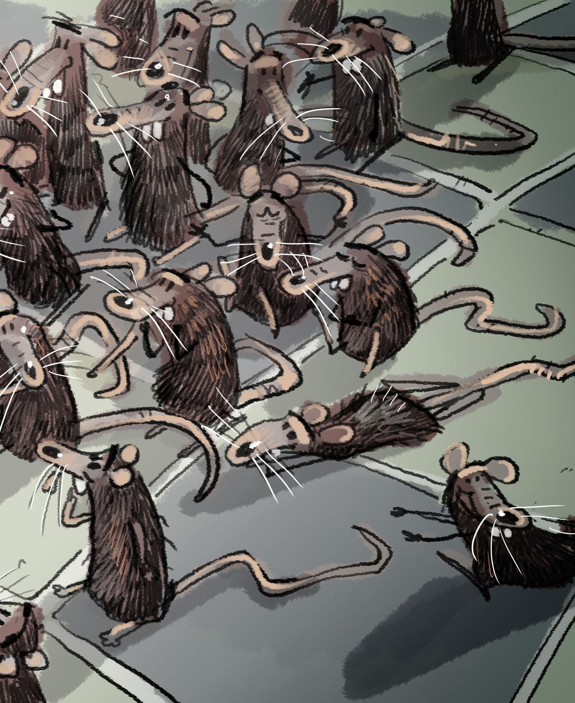 Guillermo casas ratones2