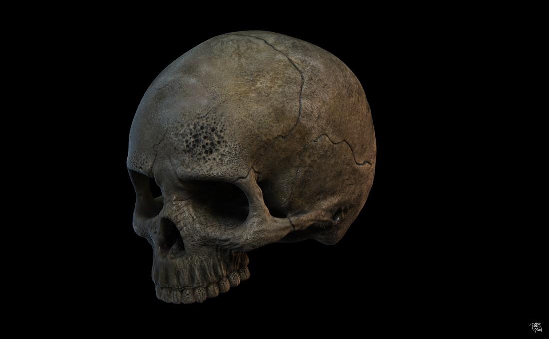 Skull study in Zbrush