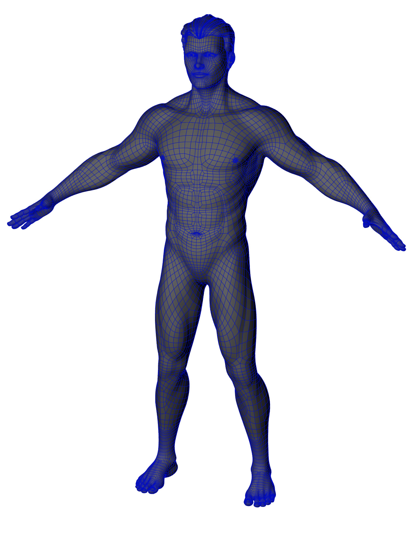 Stalin M Human Anatomy Male