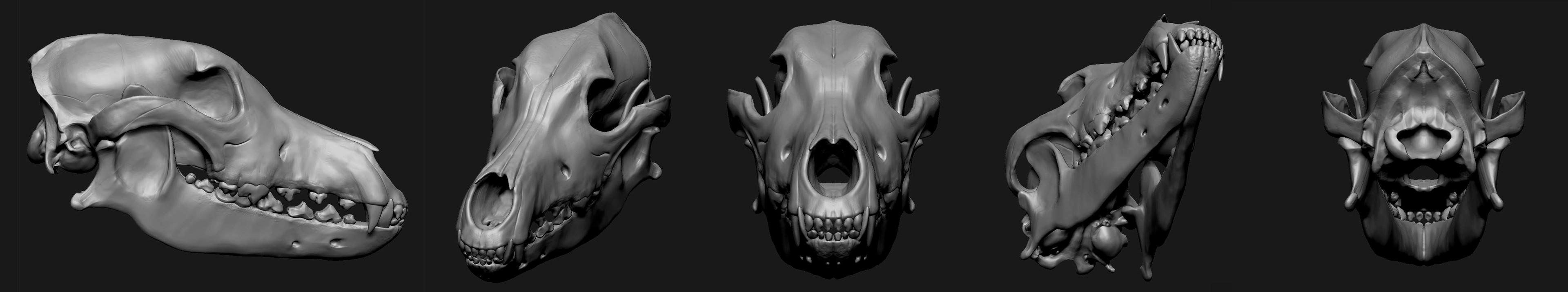 Skull in various views