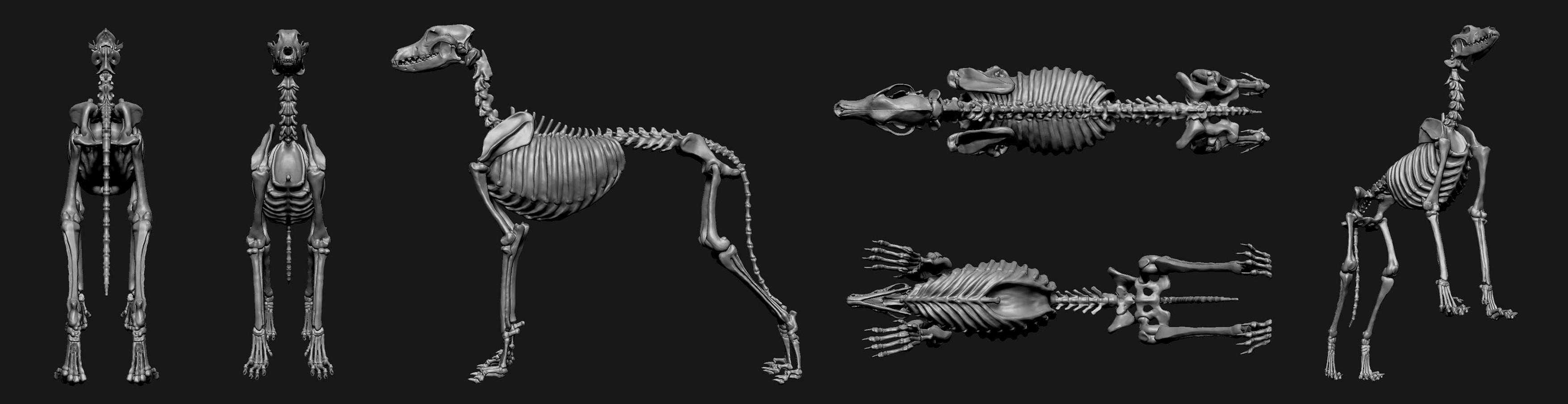 Full skeletal system