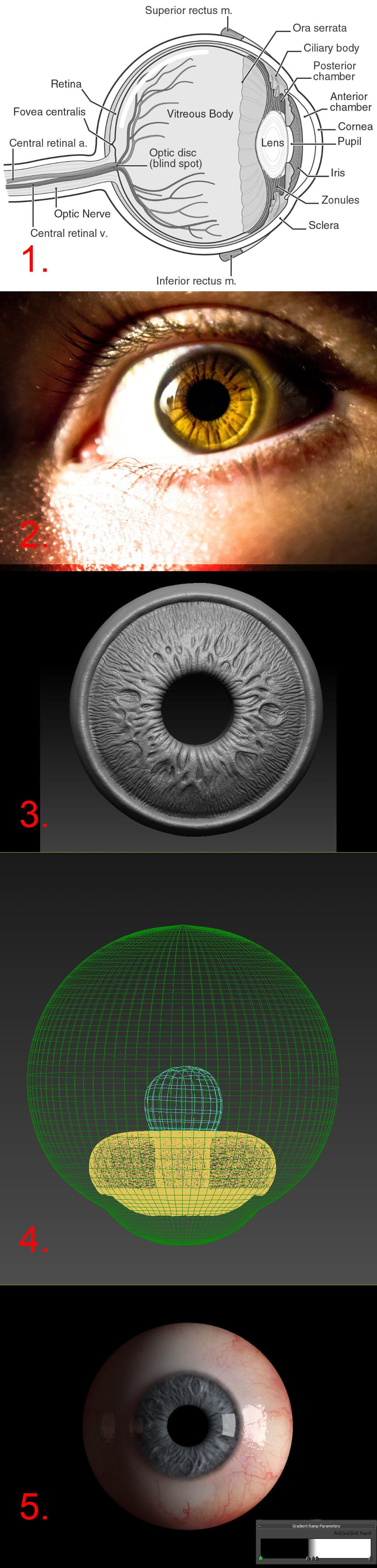 Eyeball Setup