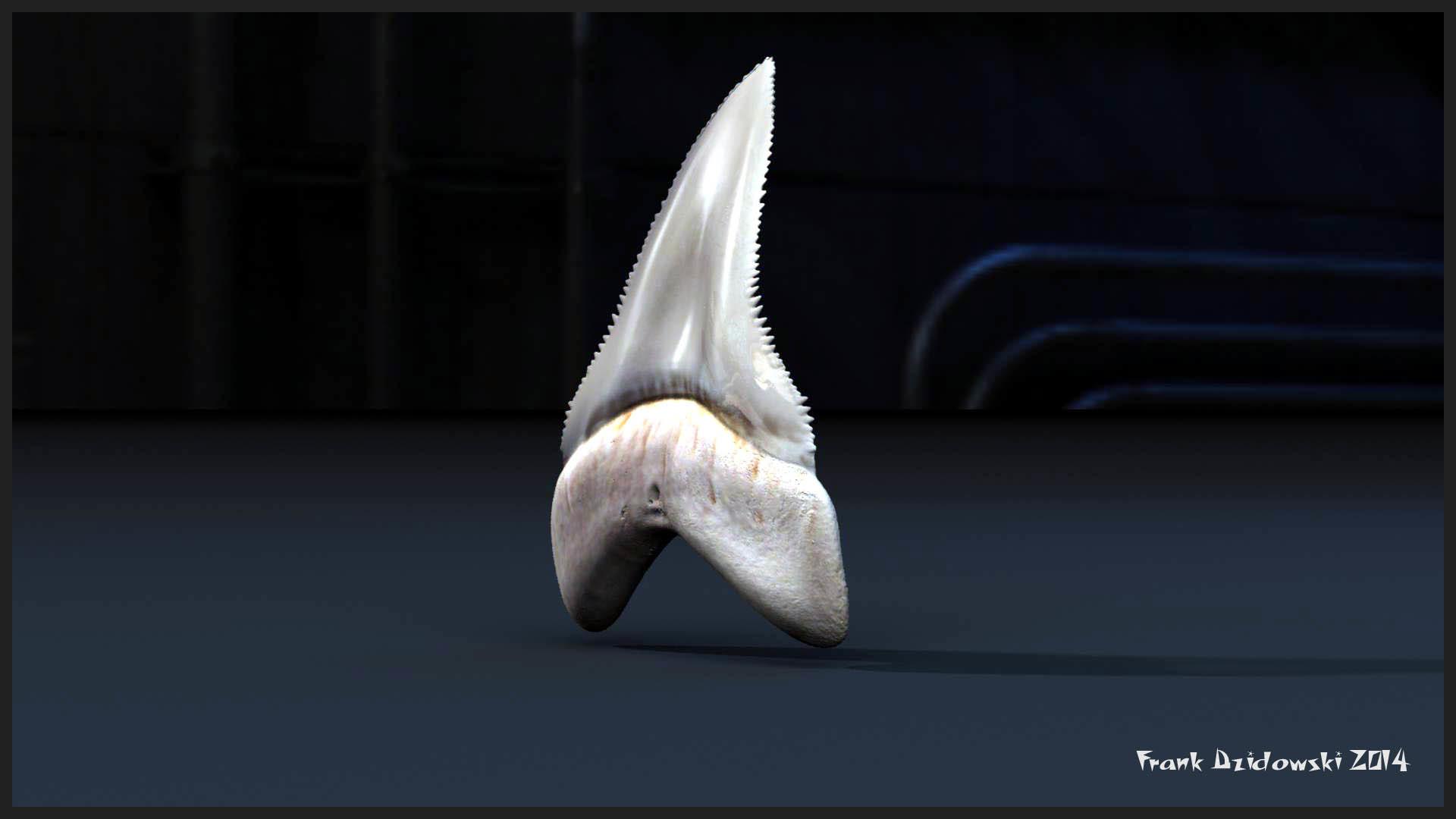 Frank dzidowski sharktooth v001a