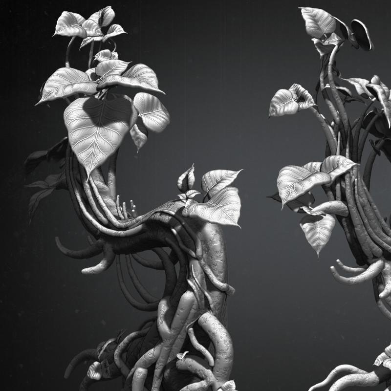 Jamir blanco plant cropin 01