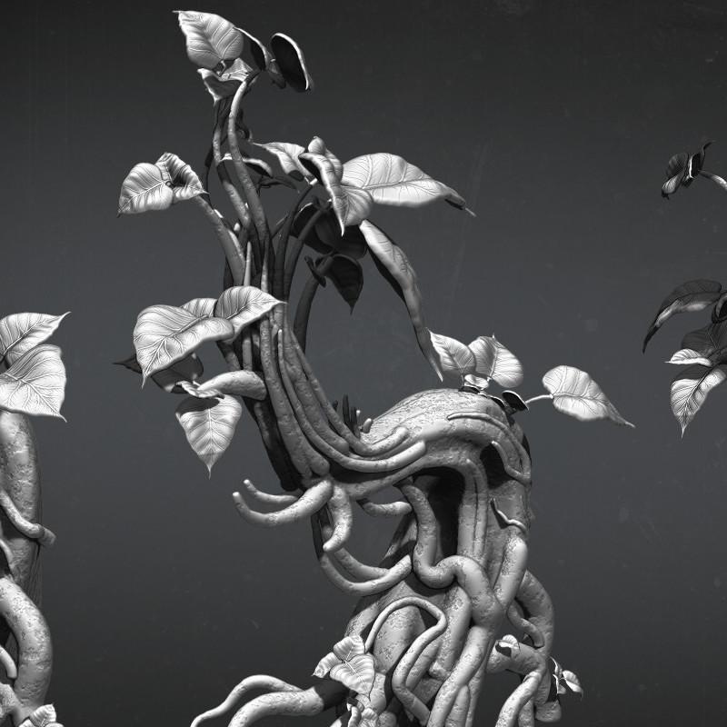 Jamir blanco plant cropin 02