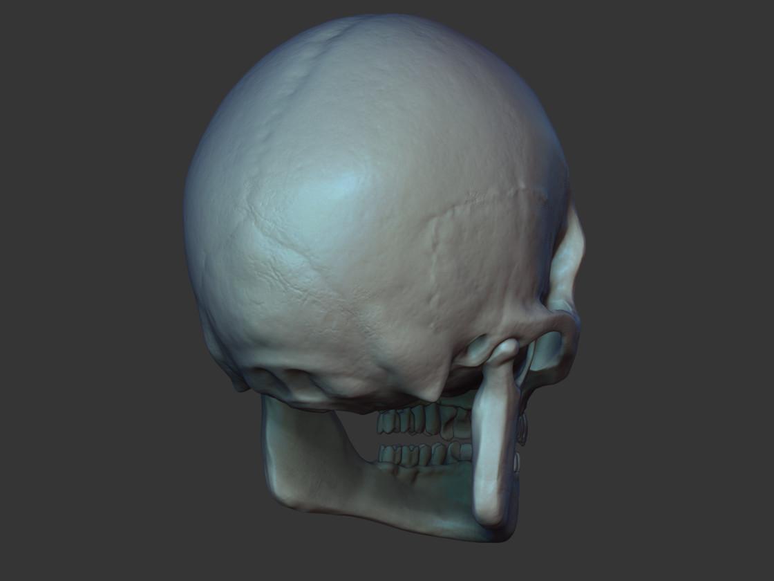 Marcos palante skull back