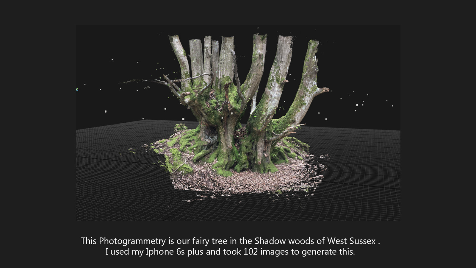 Fairy Tree shadow woods