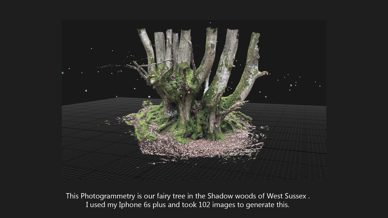 Fairy Tree shadow woods