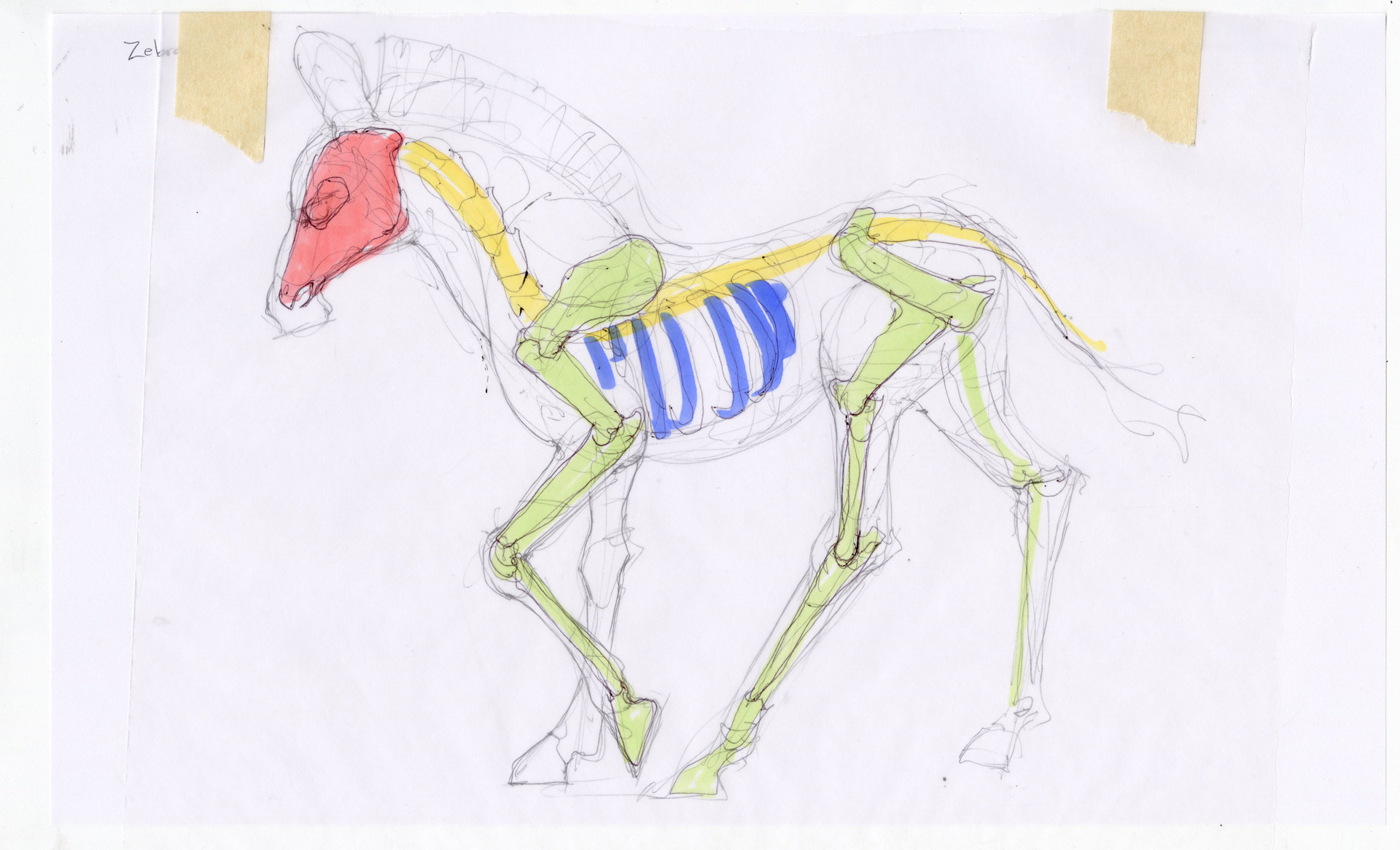 Madeline buanno skeleton11