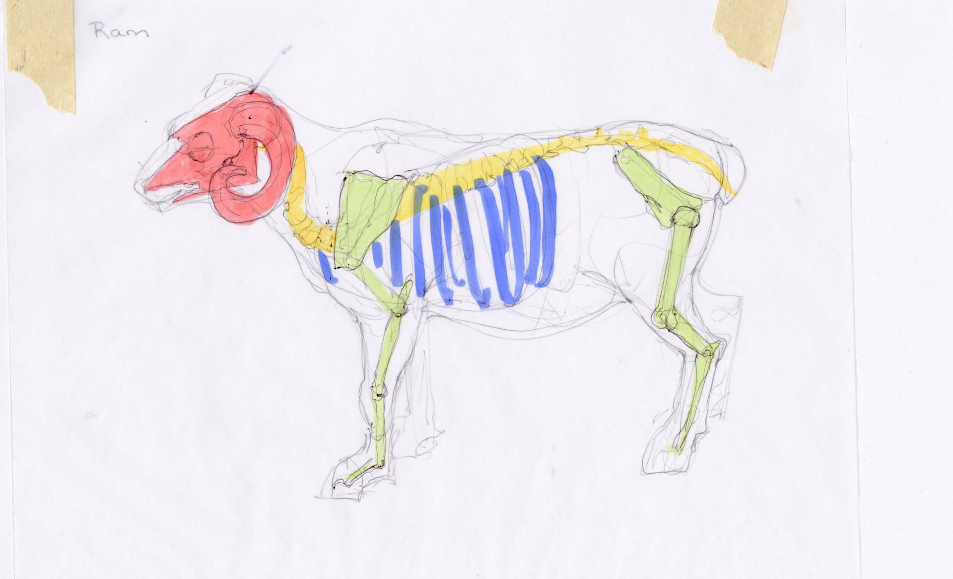 Madeline buanno skeleton03