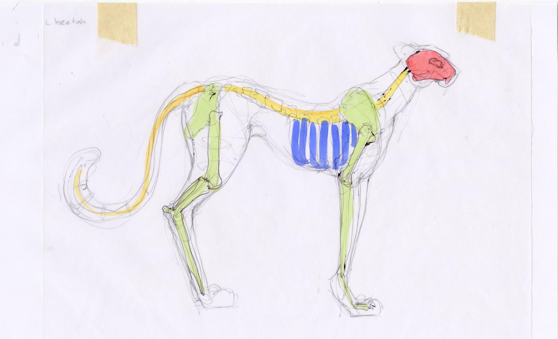 Madeline buanno skeleton10