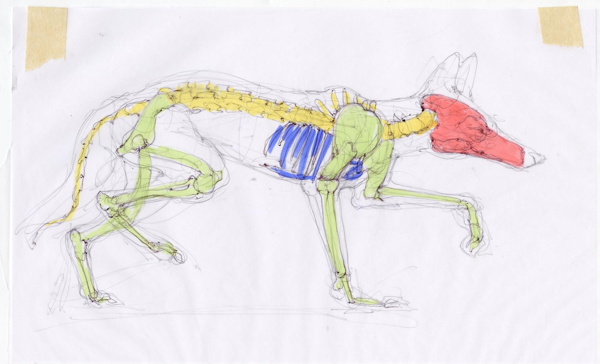Madeline buanno skeleton14