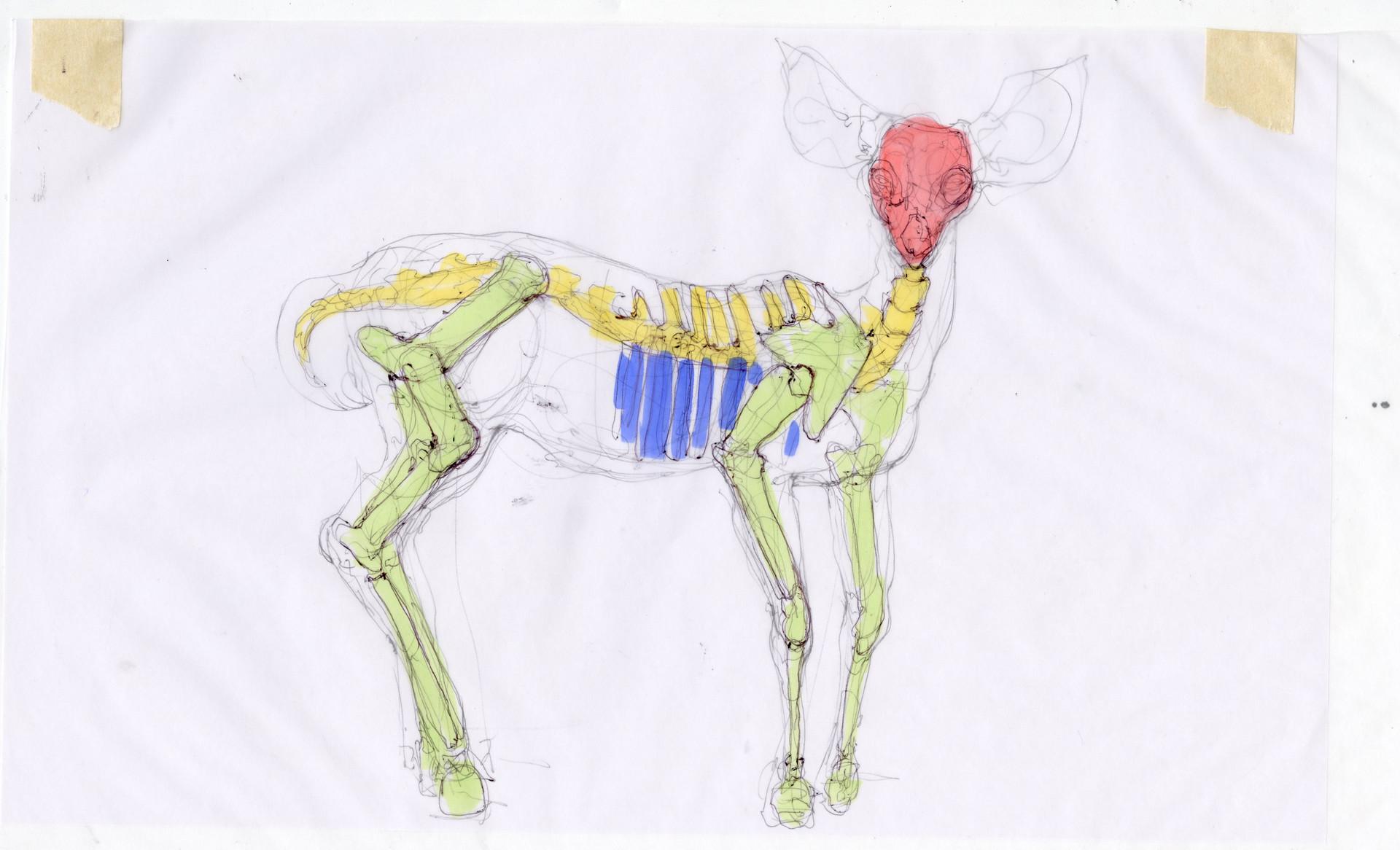 Madeline buanno skeleton15