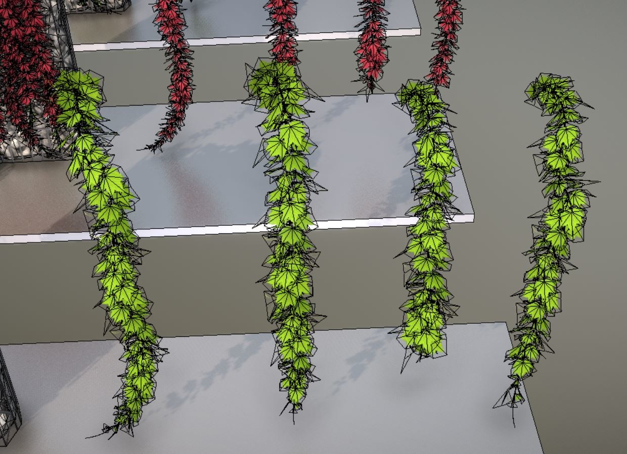 Grapevine wireframe hanging/growing down