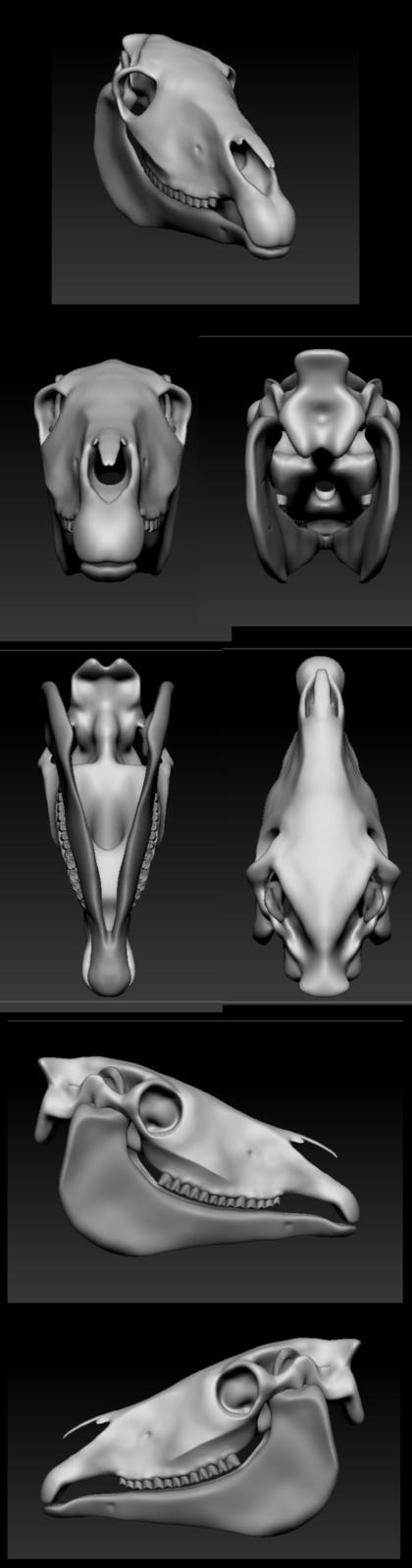 Horse Skull Practice Sculpt