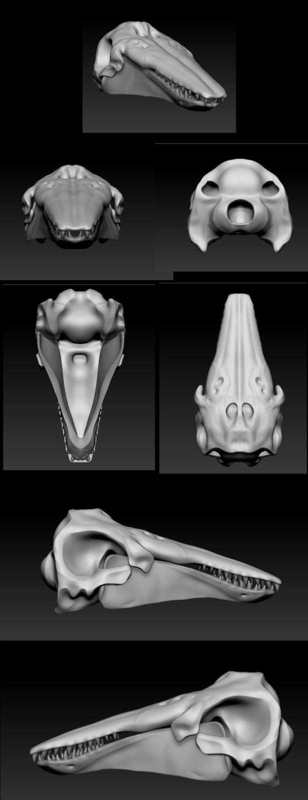 Beluga Skull Practice Sculpt