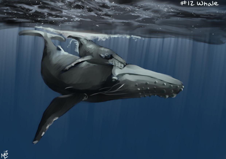 Michael davis 12 whale
