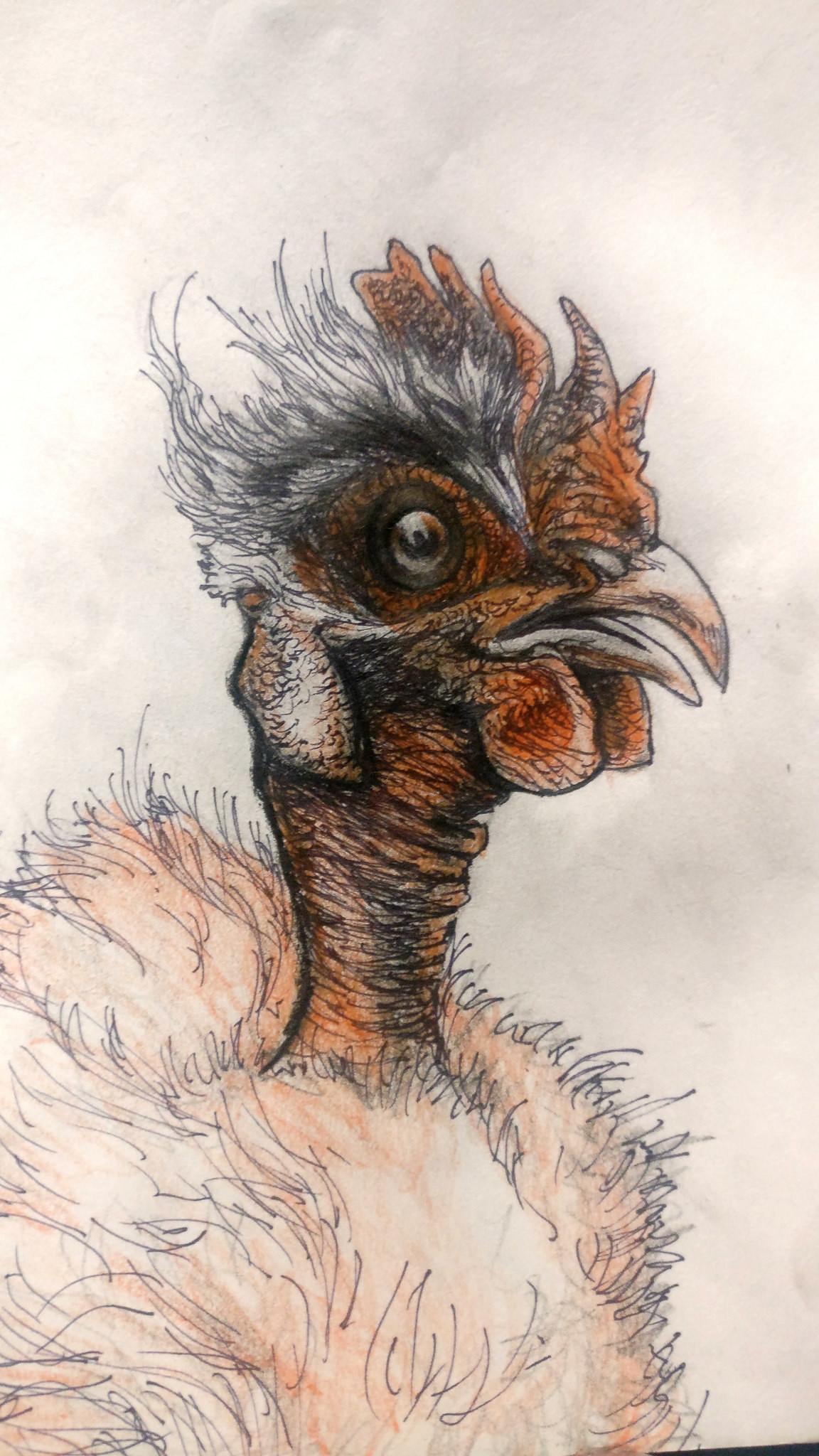 Grey hash chicken