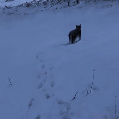 Jakub rozalski hunters wolfpack s