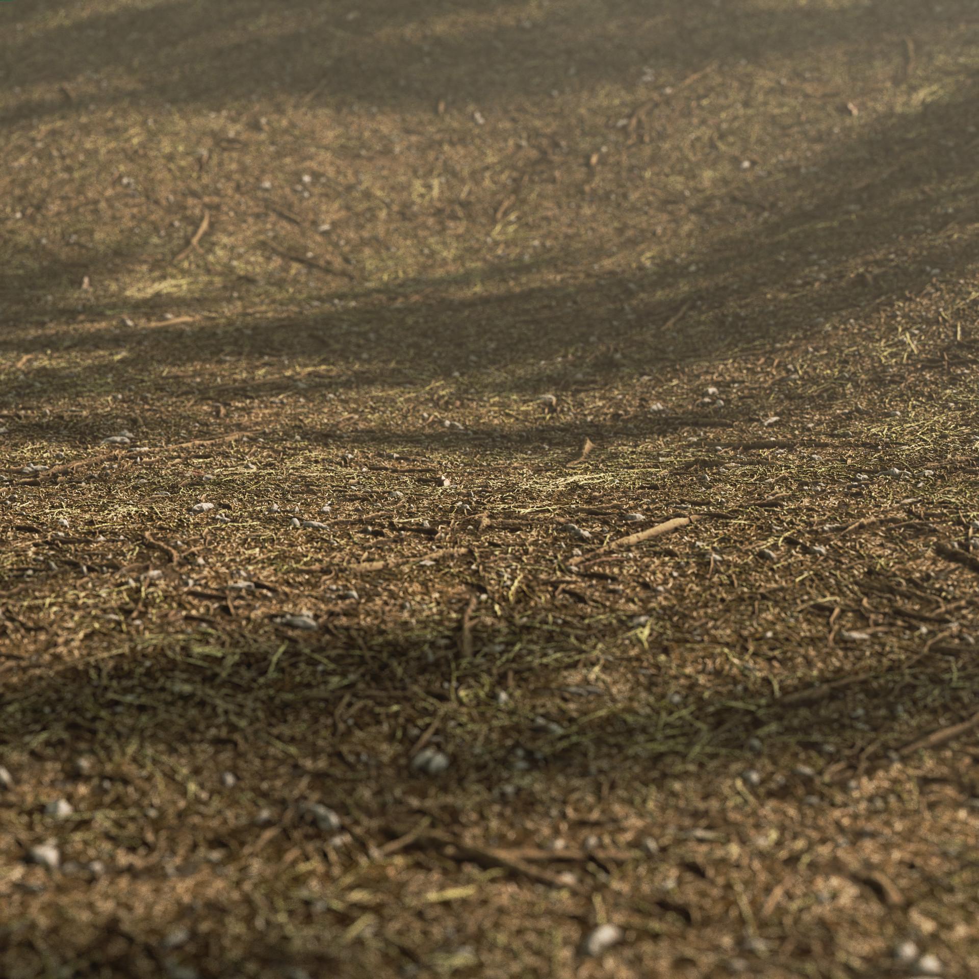 Cem tezcan autumn ground 00000 beauty
