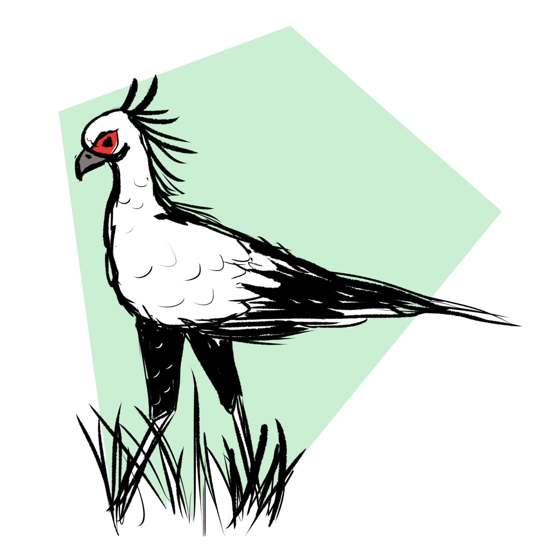 Jessi olney secretary bird 1