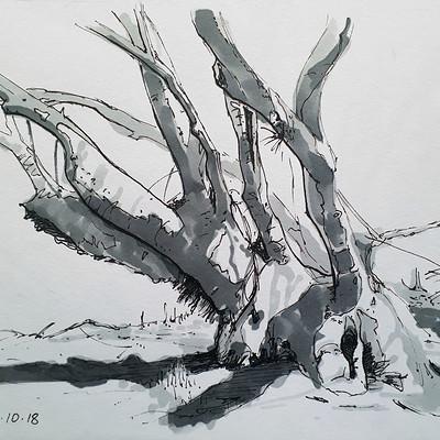 Barry keenan old tree 04 crop