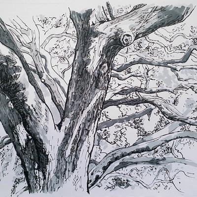 Barry keenan old tree 05 crop