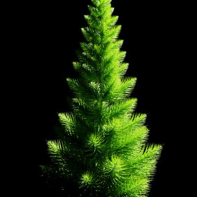 Ph le tree