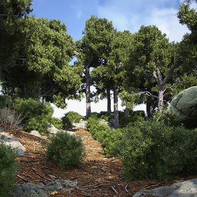 Christoph schindelar scots pine forest demo 014