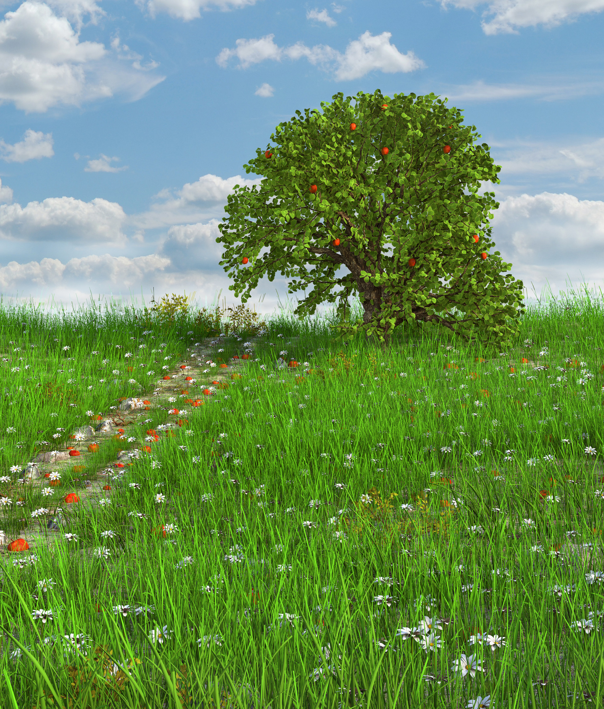 Marc mons meadow6