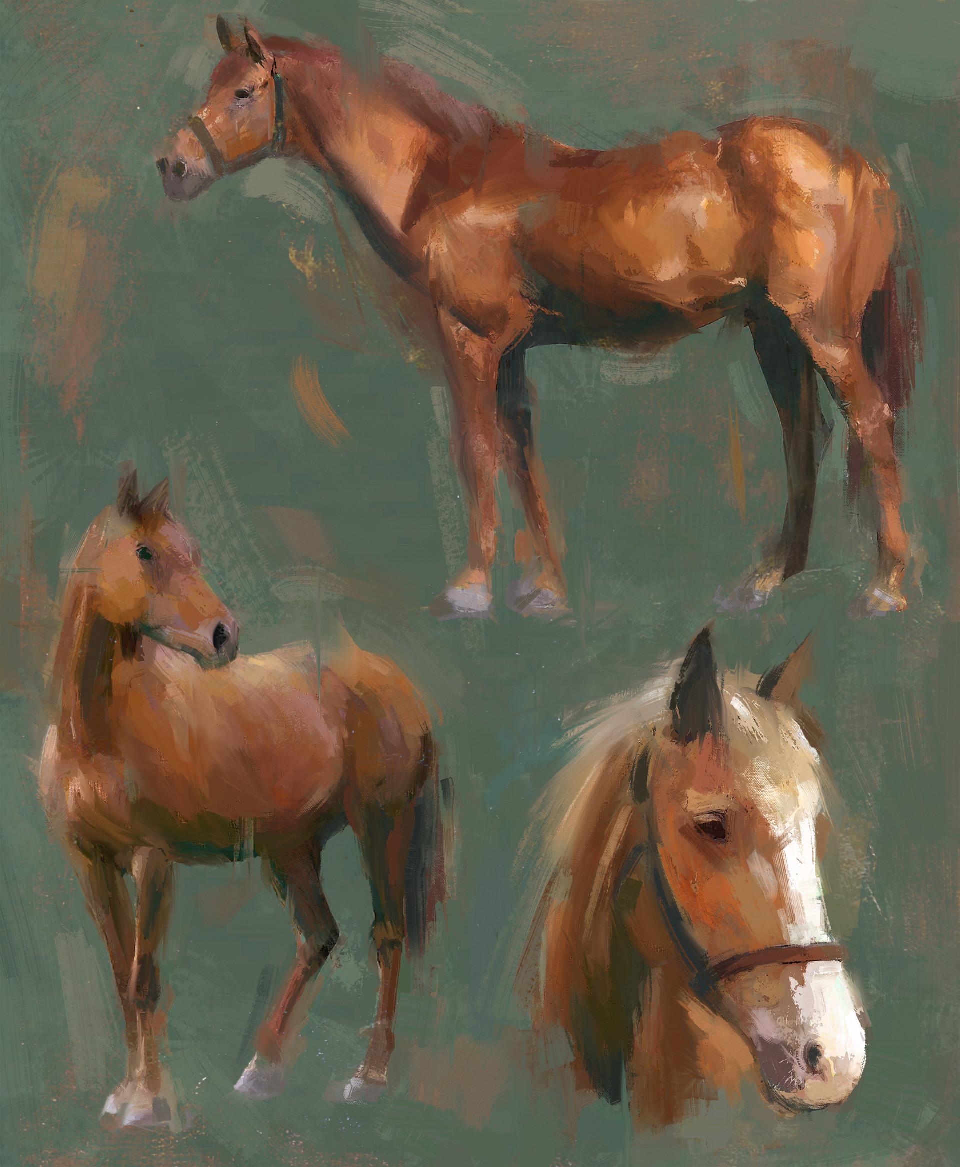 Juan manuel osuna estudios de caballos 4