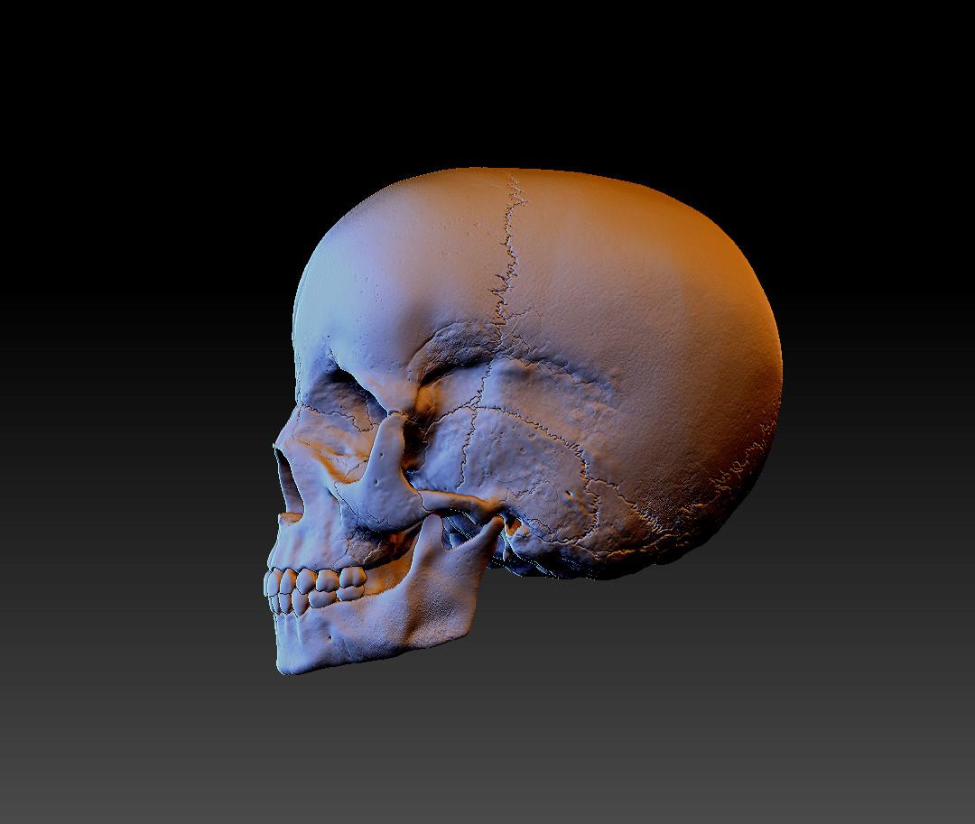 Child Skull Left Side