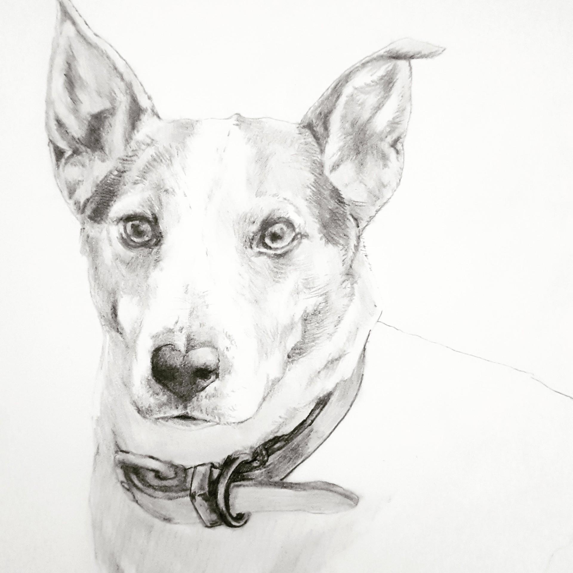 Artstation dog pencil sketch nikhil sha