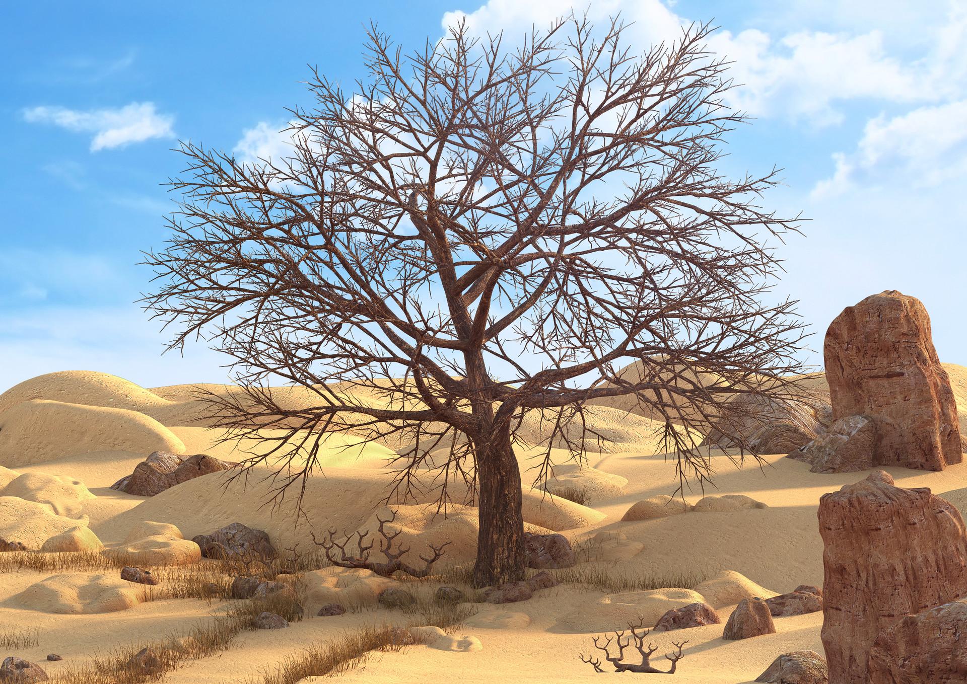 Marc mons desert7