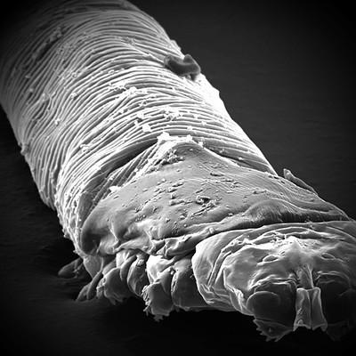 Ronan salieri parasites 3