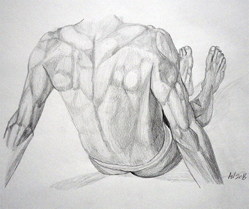 Back Anatomy Study
