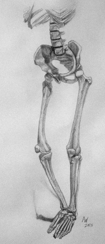 Leg Bone System  Study