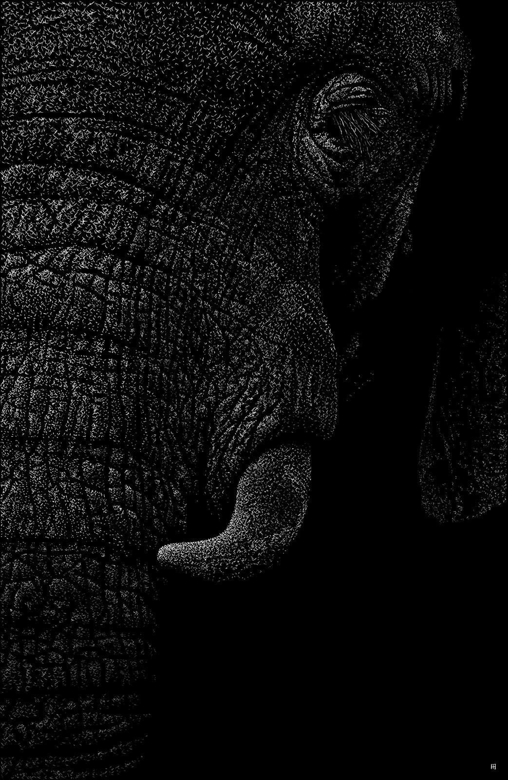 elephantidae