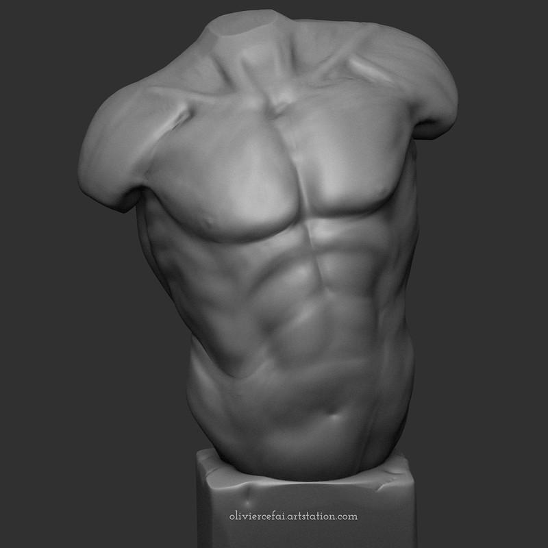 Male Torso Anatomy Study