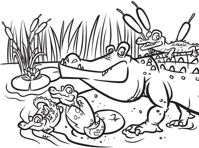 Steve rampton gators