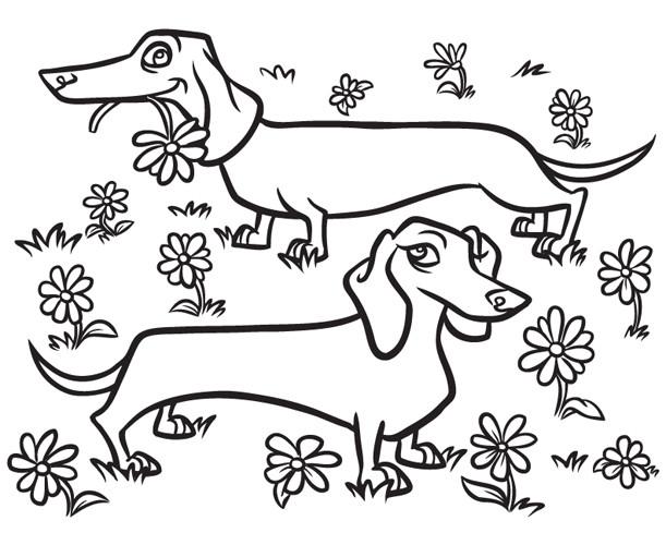 Steve rampton dachshunds