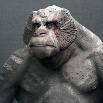 Einar martinsen week 08 jm course einarmartinsen primate 01