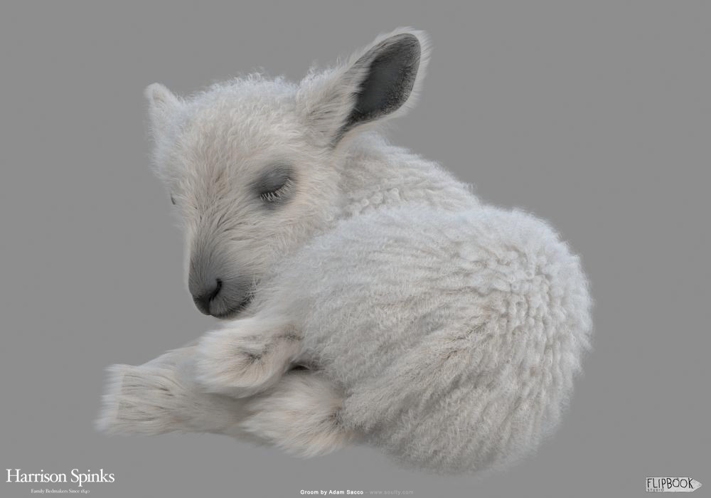 Adam sacco lamb baby groom 0001