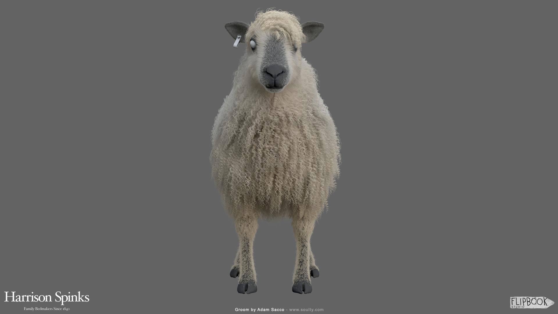 Adam sacco sheep groom 0001