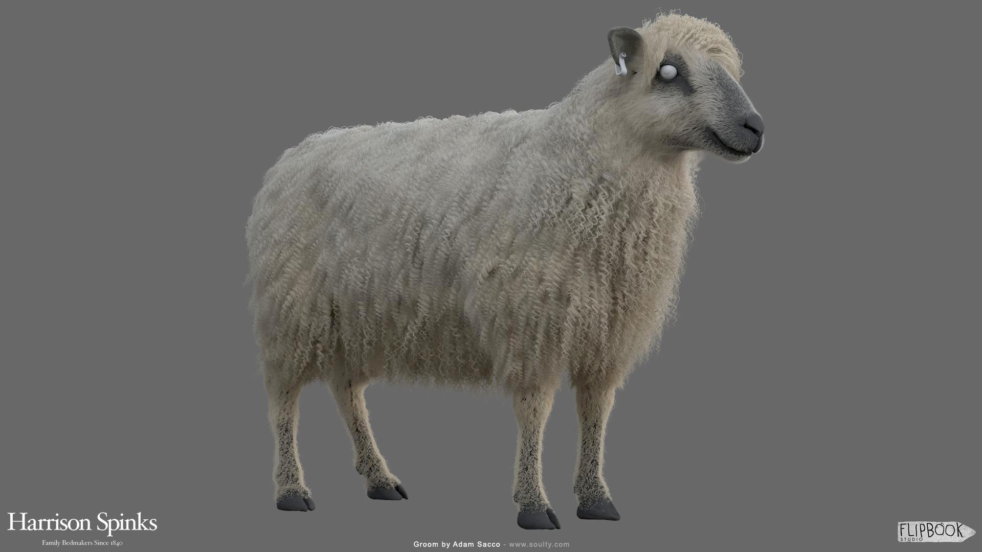 Adam sacco sheep groom 0002