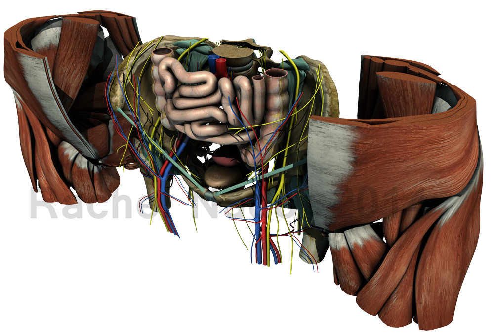 Rachel nador pelvis dissectionao2