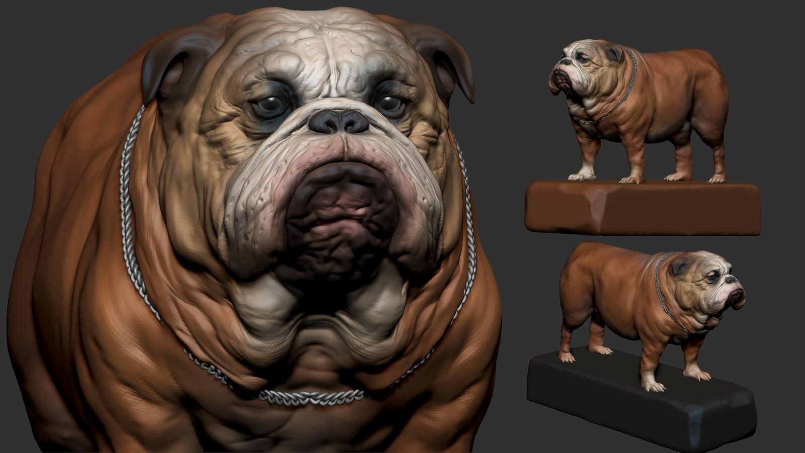 Bulldog zbrush WIP