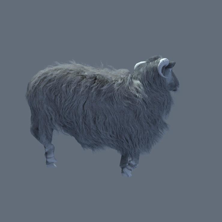 clay render of sheep. I modeled my sheep after the ones found on the Faroe Islands-very cool looking!