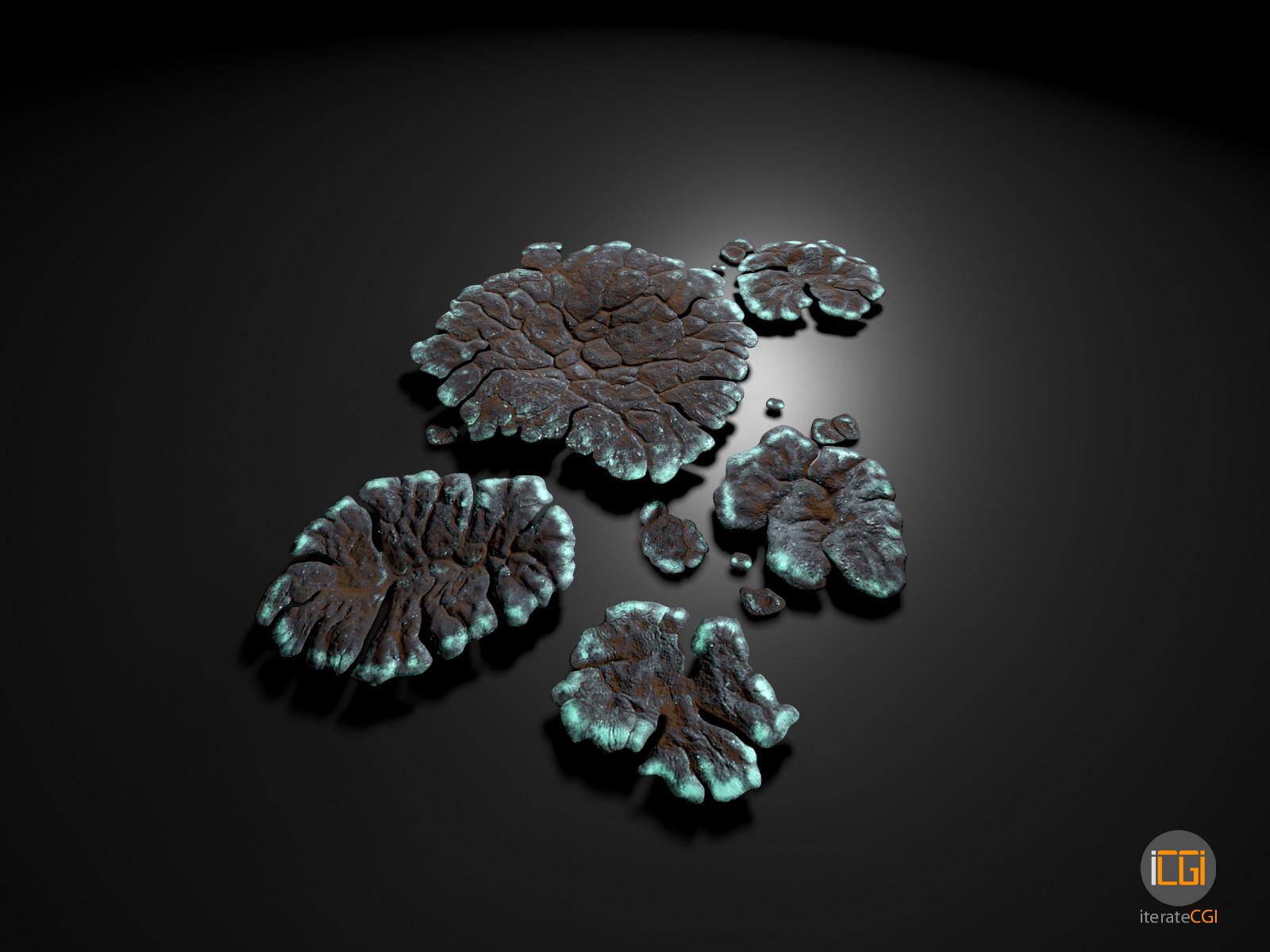 Johan de leenheer alien plant lichen type1 10