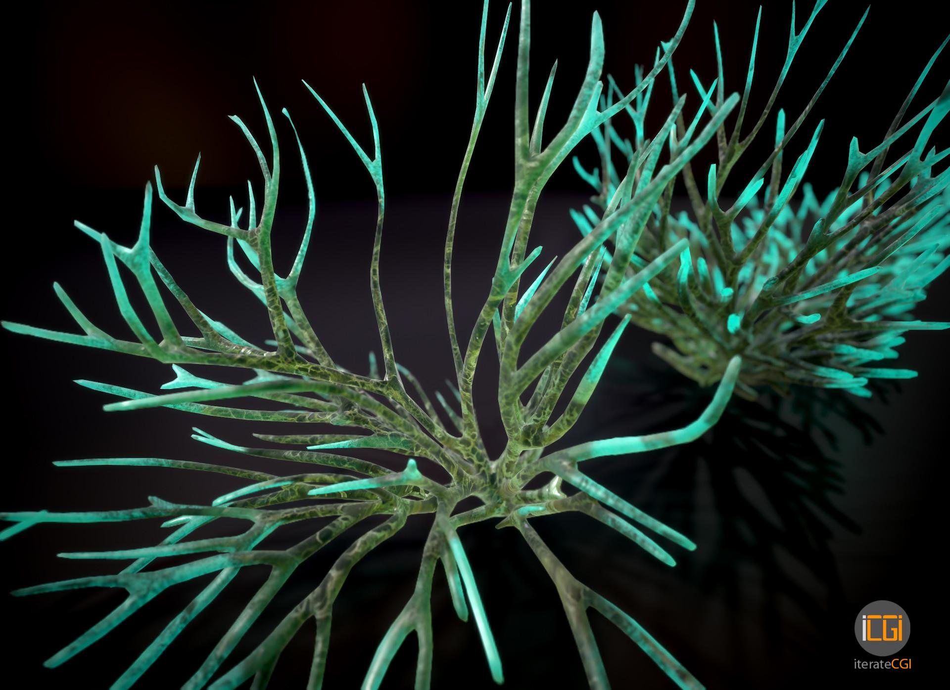 Johan de leenheer alien plant fungus type1 3